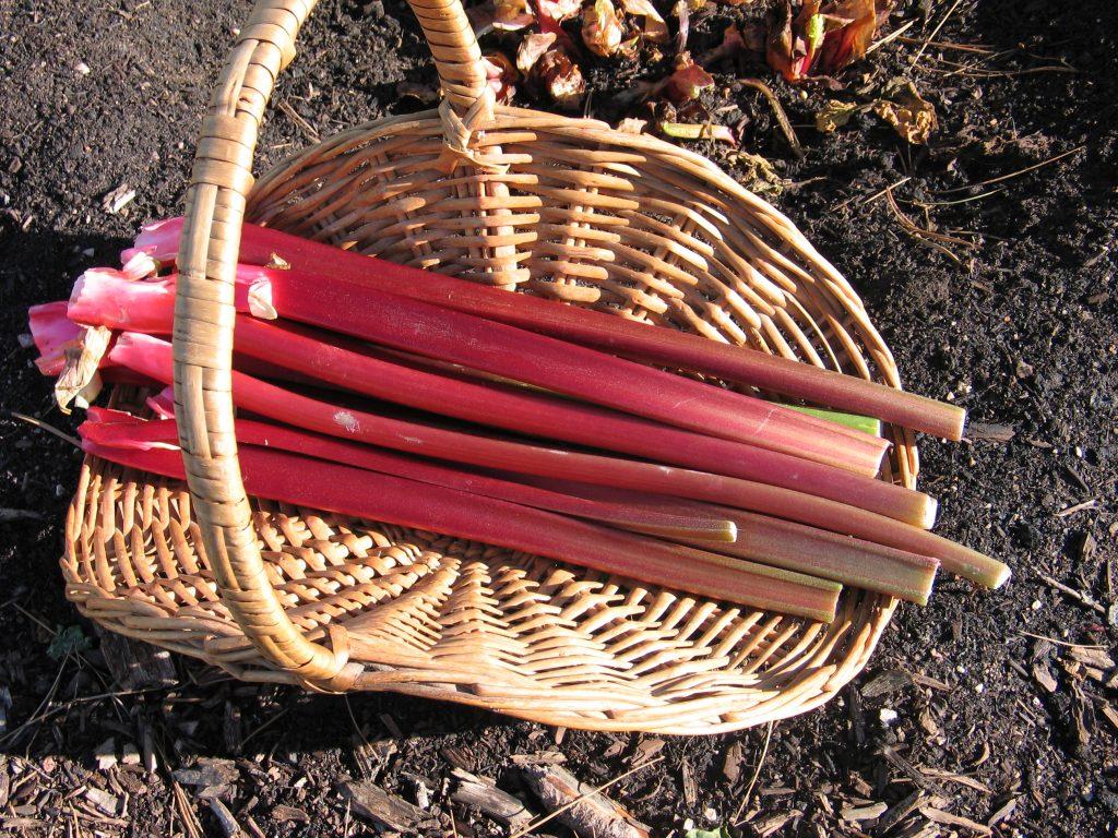 Canada Red rhubarb in a basket