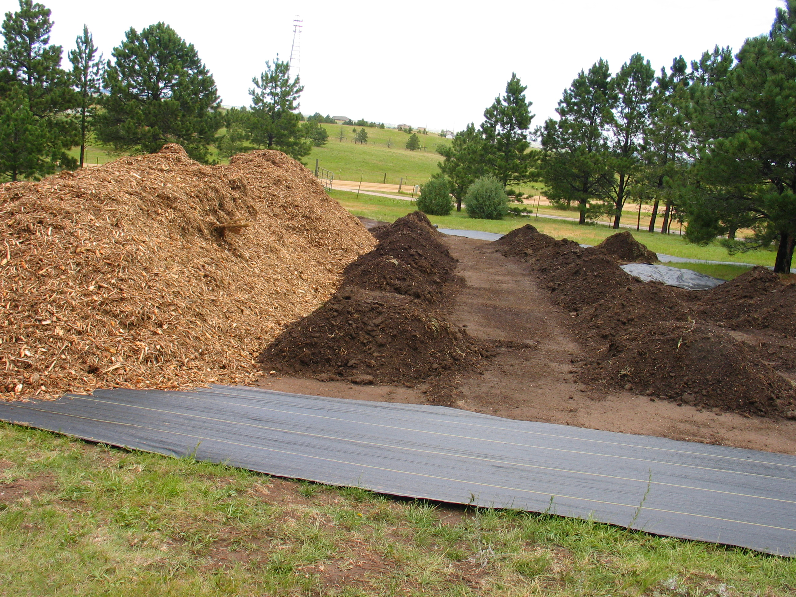 rhubarb mounds and mulch