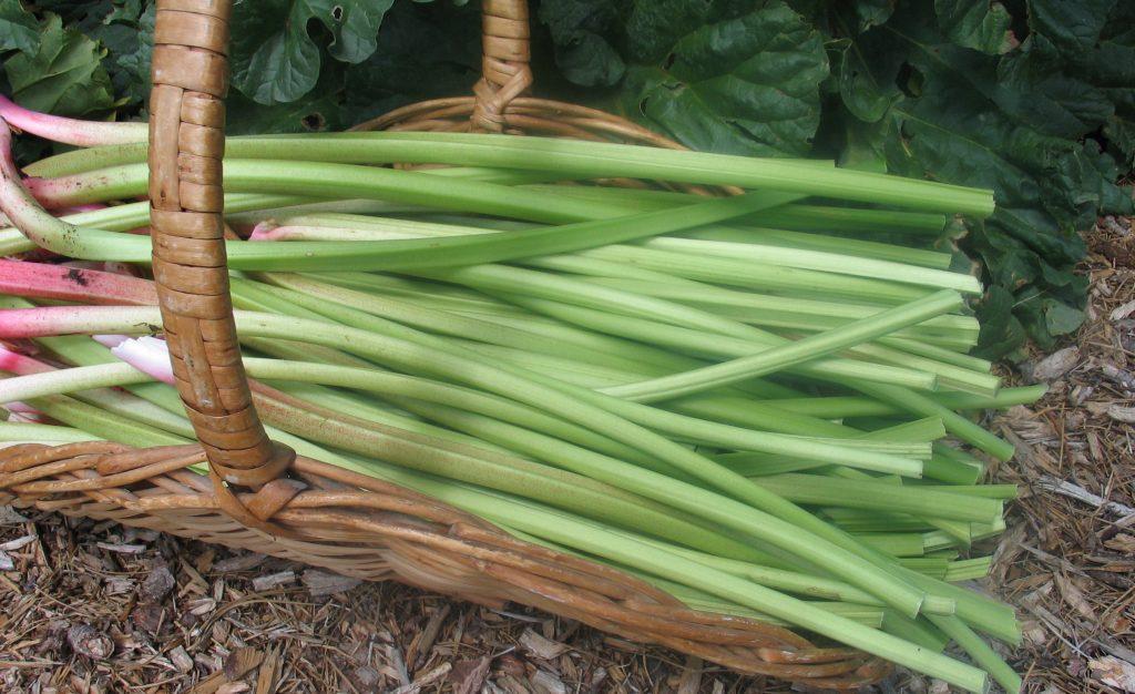 Turkish rhubarb in a basket