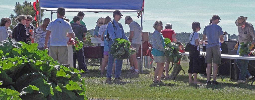 Rhubarb Harvest Festival
