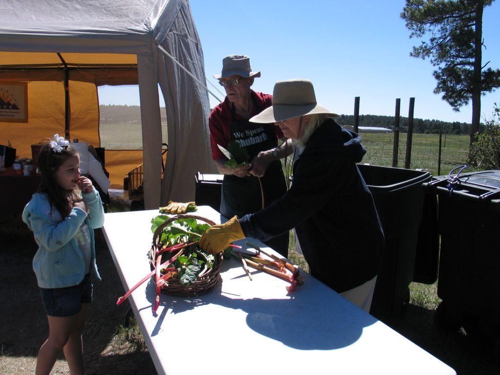removing rhubarb leaves at the Rhubarb Harvest Festival