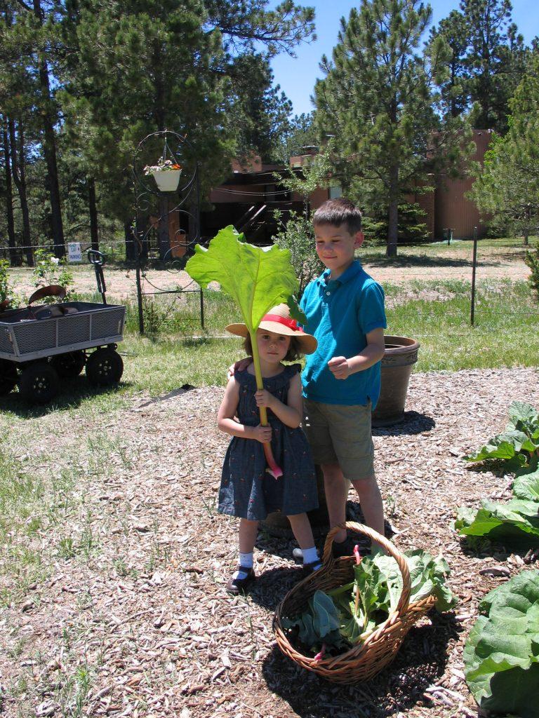 children picking rhubarb at the Rhubarb Harvest Festival