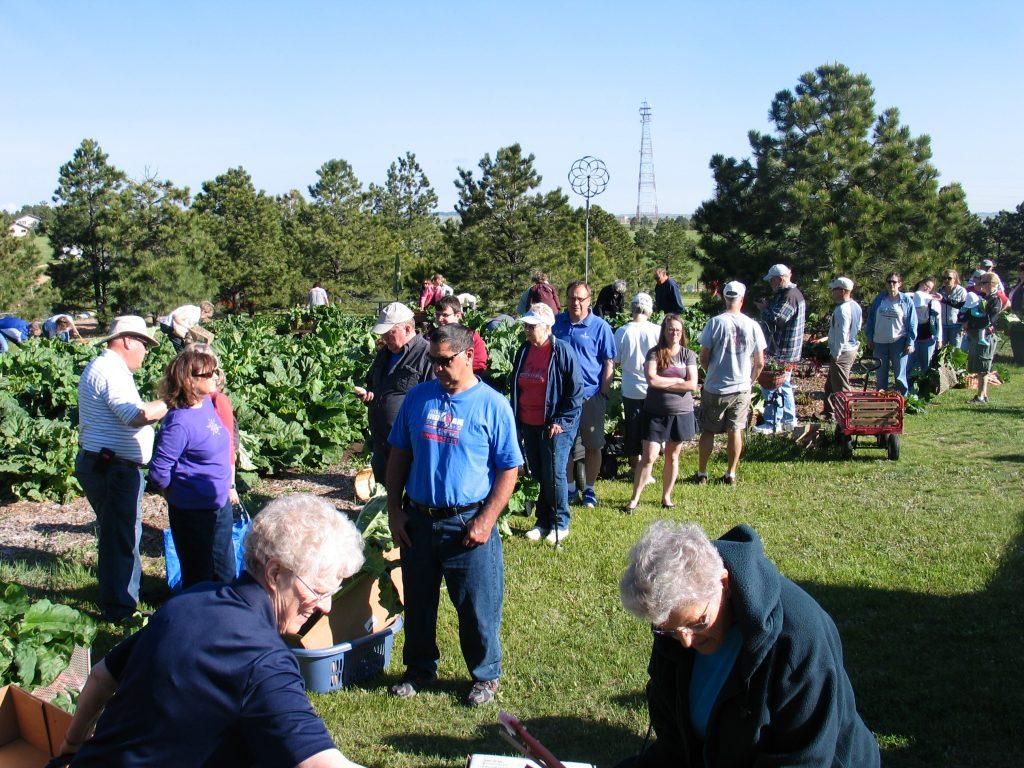 croud picking rhubarb at the Rhubarb Harvest Festival