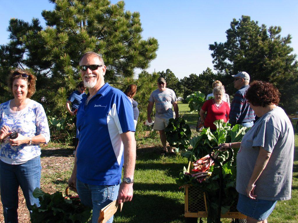 picking rhubarb at the Rhubarb Harvest Festival