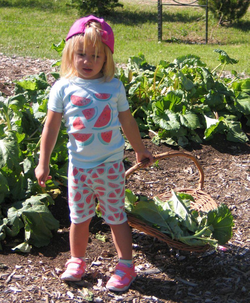 child picking rhubarb