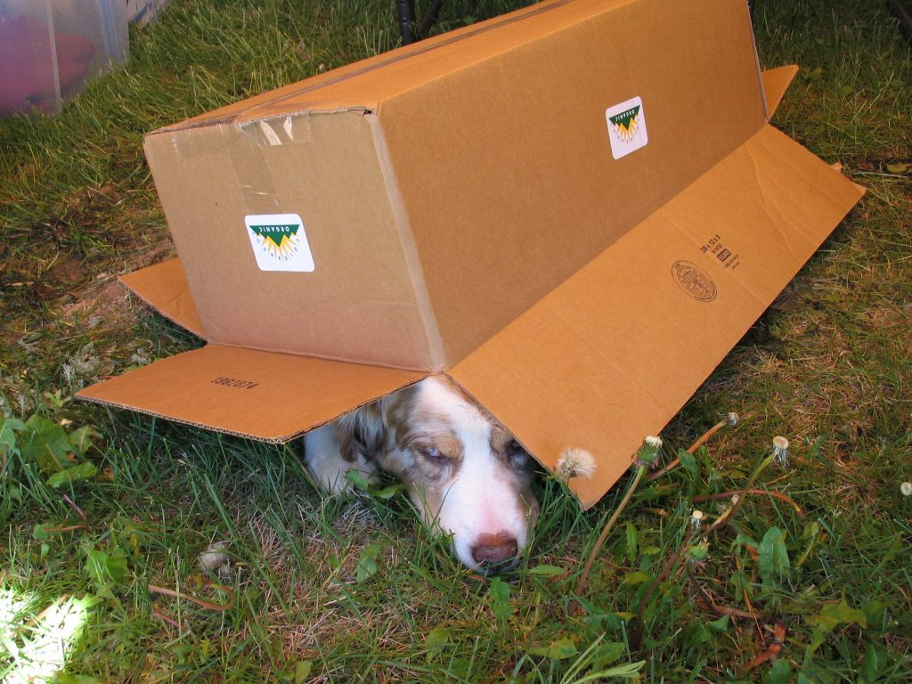 getting out of the heat at the Rhubarb Harvest Festival:  dog under box