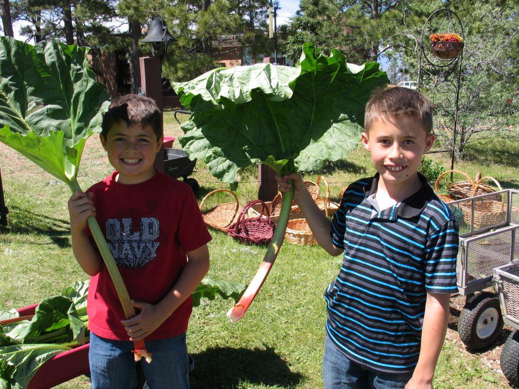 rhubarb fans