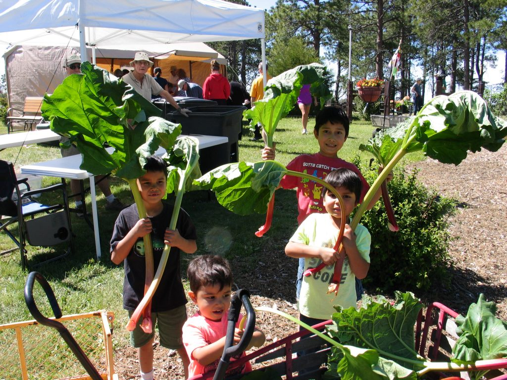 children and large stalks of rhubarb