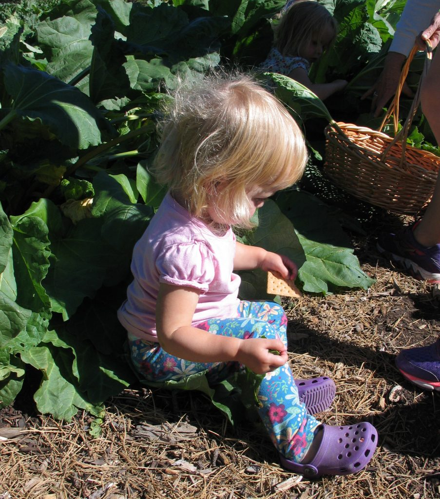 young girl in rhubarb patch