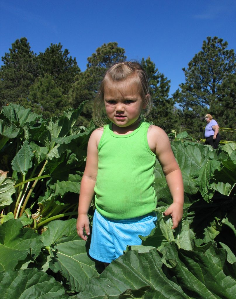 child in rhubarb patch