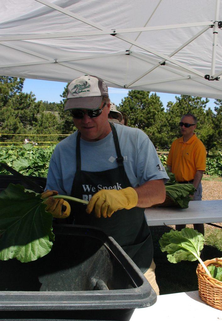 rhubarb leaf removal tent