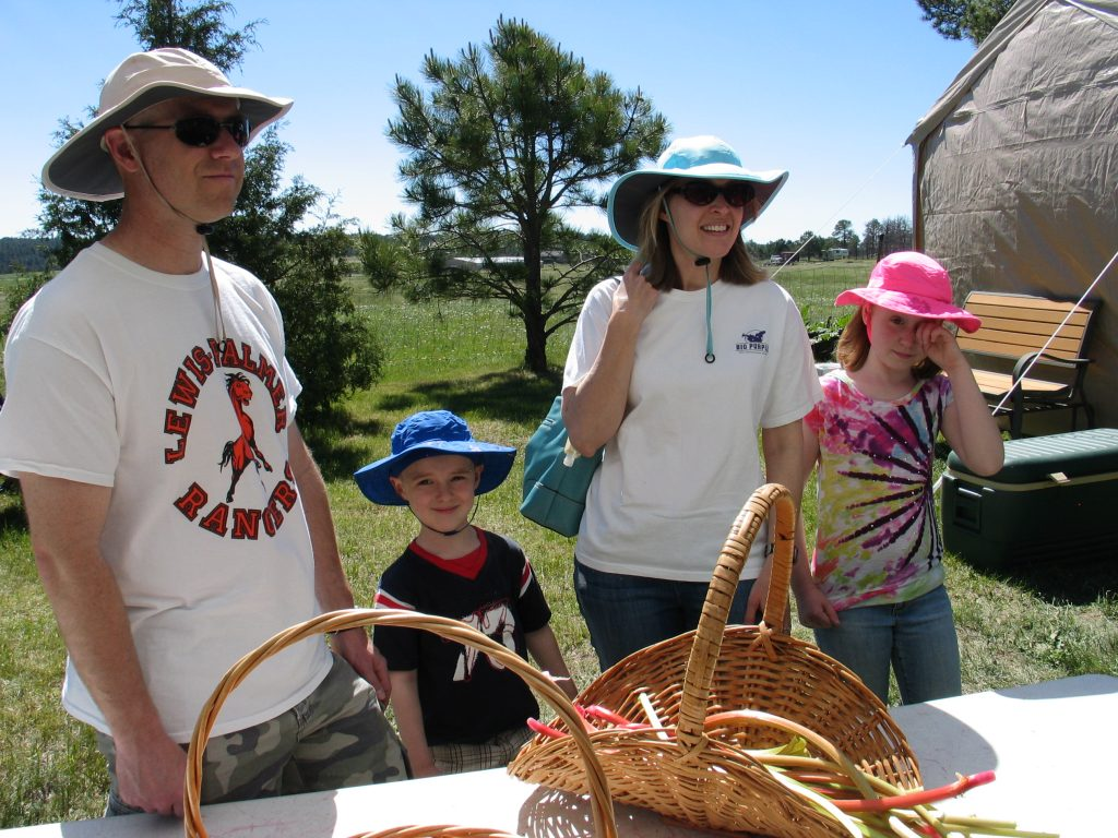 picking rhubarb in baskets