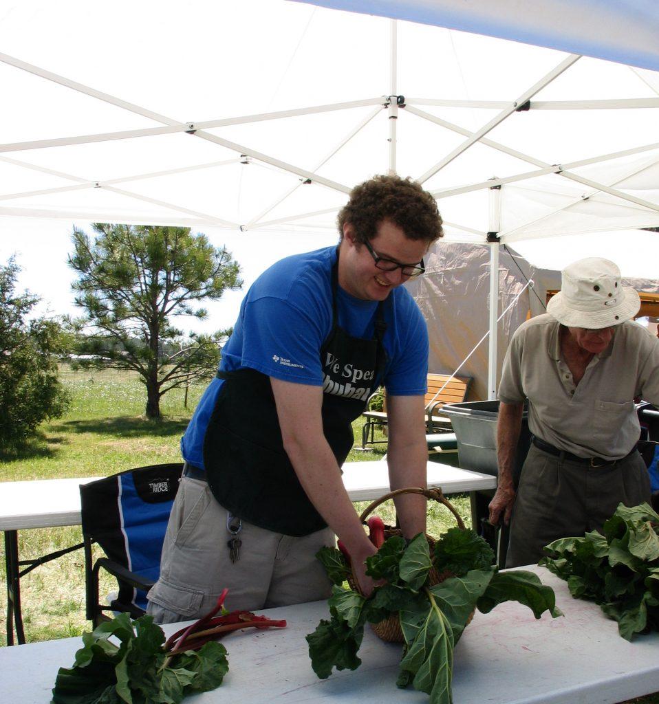 removing rhubarb leaves