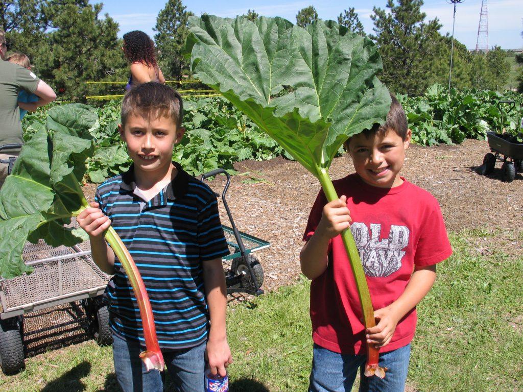 rhubarb as big as the kids