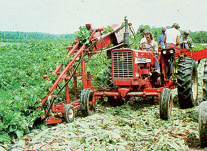 rhubarb harvesting tractor