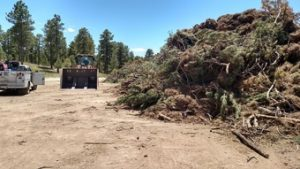 Slash piled and ready for mulching