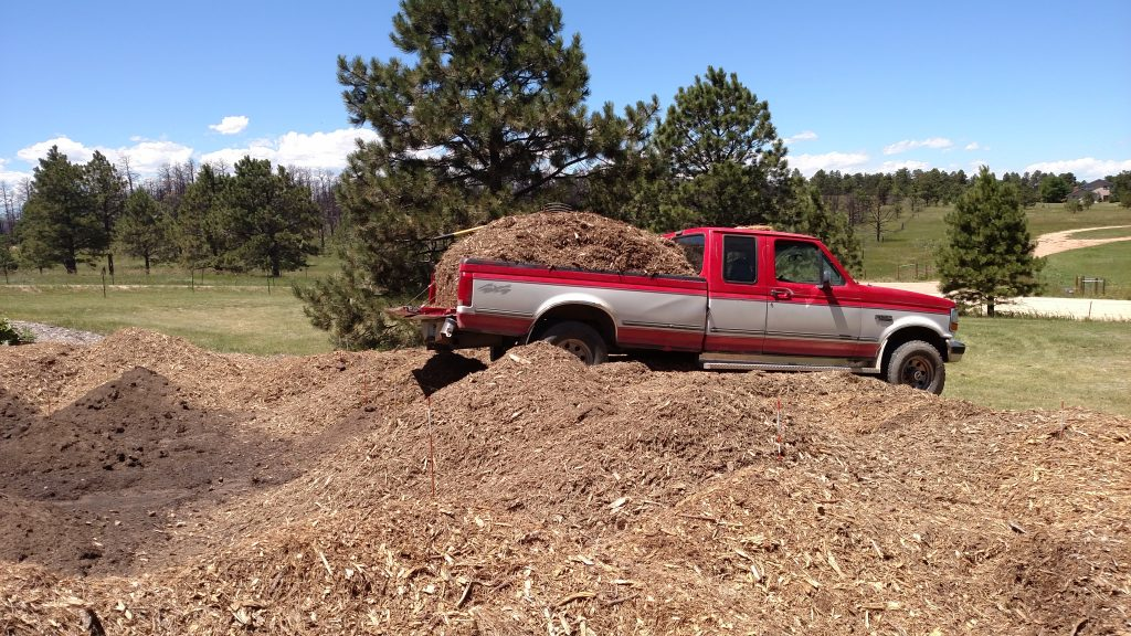 1992 Ford F250 delivering mulch to rhubarb field