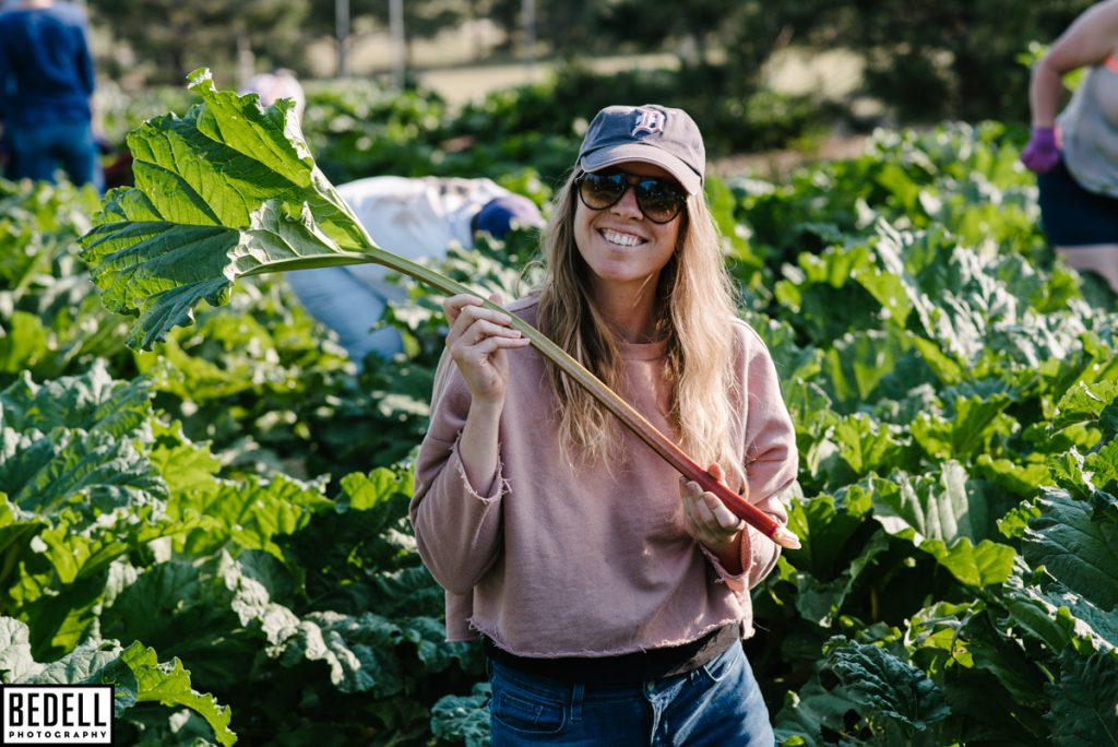 pick-your-own rhubarb harvesters