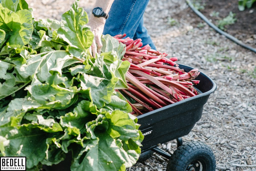 rhubarb in a wagon
