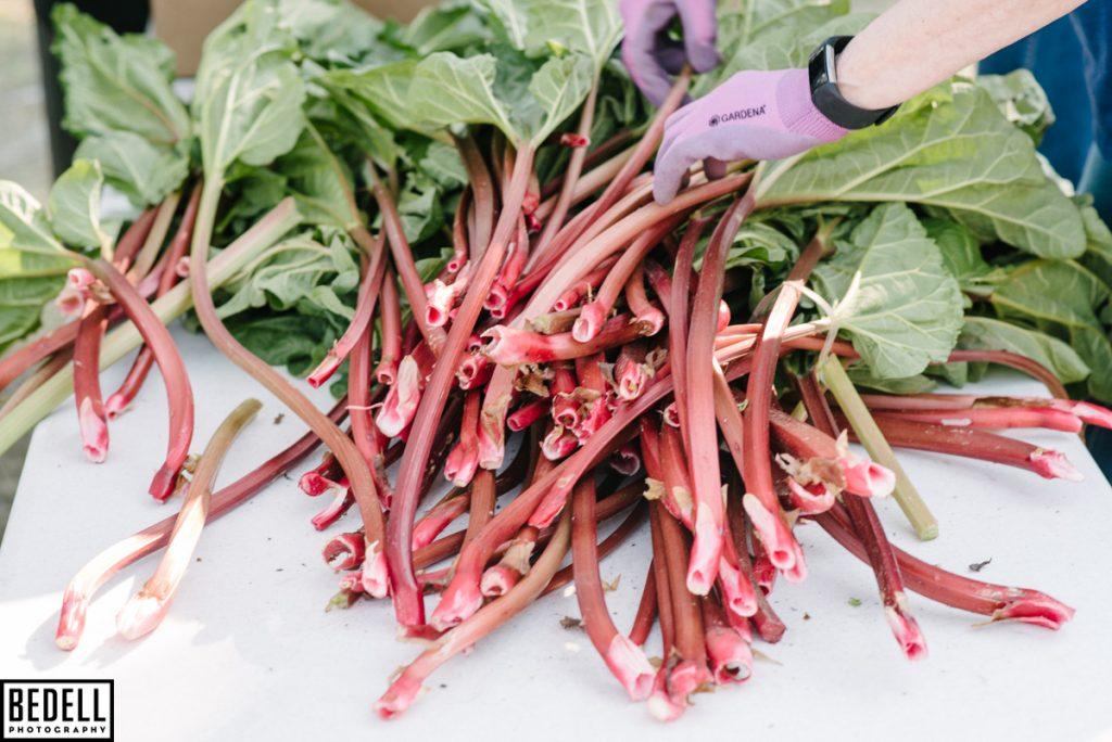 organic rhubarb red
